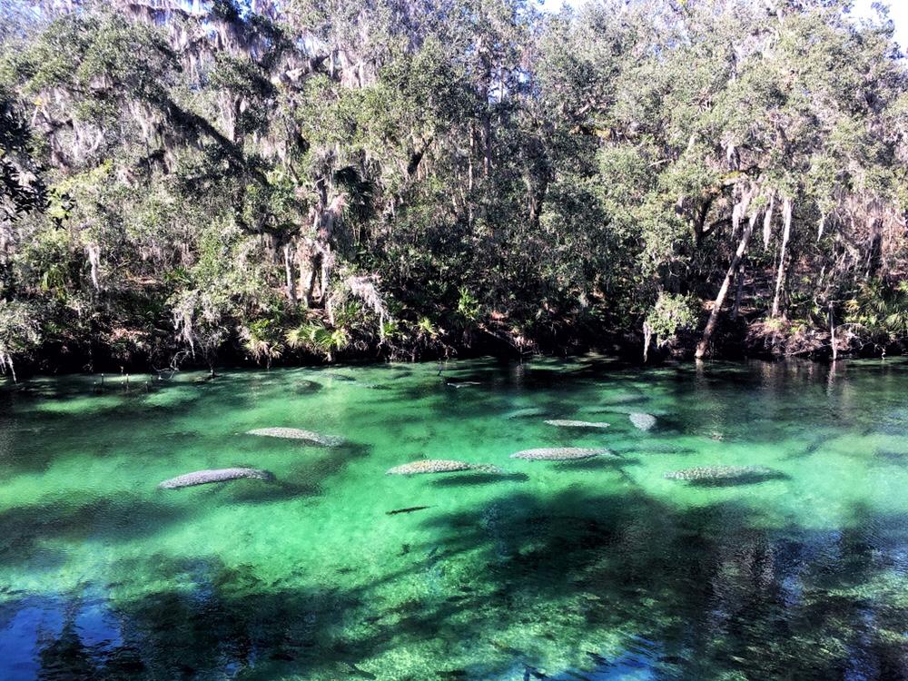 Florida State Parks Blue Spring