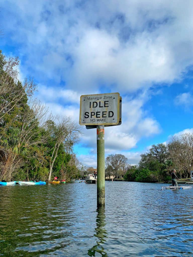 Kayaking with Florida Manatees in Crystal River