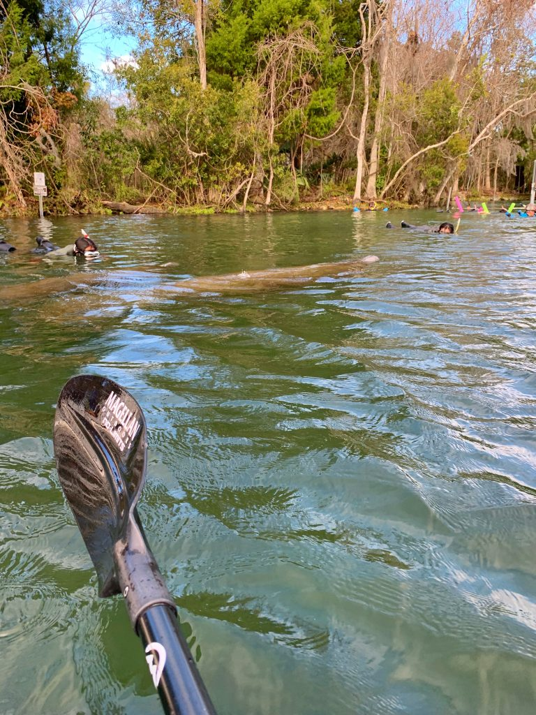 Clear Bottom Kayaking with Florida Manatees in Crystal River